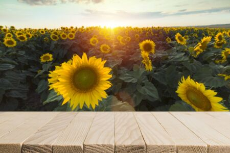 sunflower seeds in burlap bag on wooden table with field on the background. Photo with copy space area for a text Zdjęcie Seryjne
