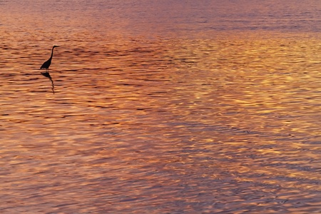 Sunset colours on the water with heron silhouette Stock Photo - 9949666