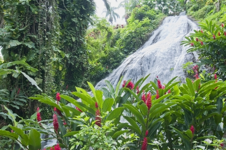 Ginger lillies in front of magnificent waterfall Stock Photo - 14249987
