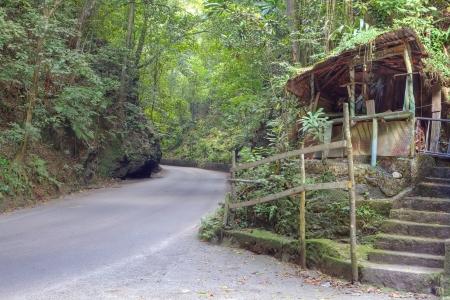 Fern gully in Jamaica, Caribbean Stock Photo