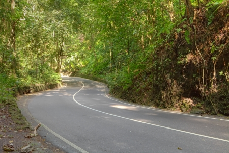 Old river bed (now a road) known as Fern gully in Jamaica, Caribbean