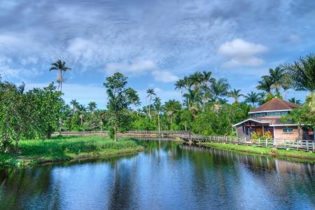 Cotton Tree lake in Negril, Jamaica
