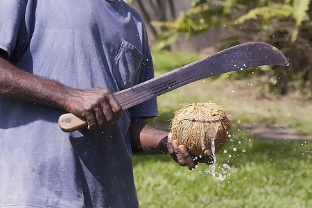 machete: Opening coconut with a machete Stock Photo