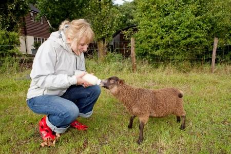 Woman Fütterung junger Schafe aus einer Flasche Standard-Bild - 18118880