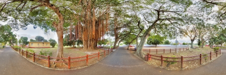 Panoramic view on park with enormous banyan tree in Triolet, Mauritius photo