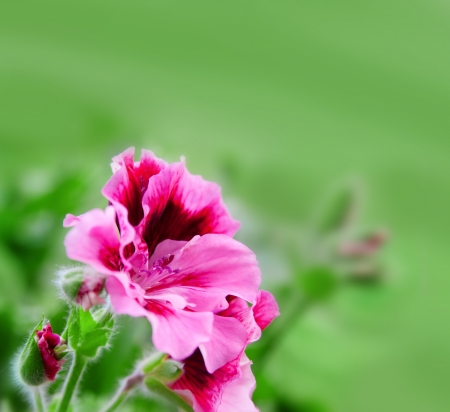 Spring blurry background with pink flowers