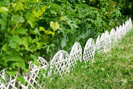 Primavera jard�n con hojas de parra Foto de archivo