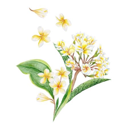 Tropical ex�tica ilustraci�n plantas en flor aislada en el fondo blanco para el dise�o