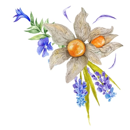 country style: Country style floral vignette with physalis, muskari and periwinkle flowers isolated on white background
