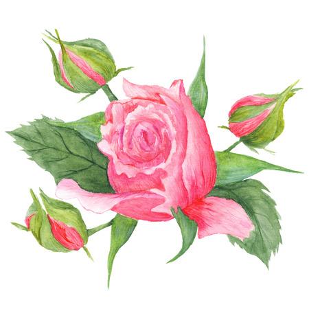 Acuarela rom�ntica pintado a mano con flores de color rosa y hojas verdes Foto de archivo