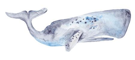 ballena azul: Ilustración pintada a mano de alta detallada grande con cetus gris y azul sobre fondo blanco Foto de archivo
