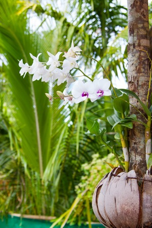 Orchid flowers planted in coconut shell with green palms on background