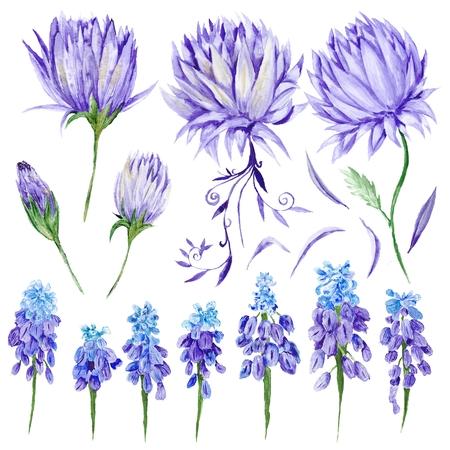 provence: Hand-painted botanical illustration with artichoke and muskari provence style design elements on white background
