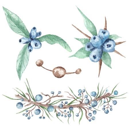 Boho style wild blue berries isolated on white background Stock Photo