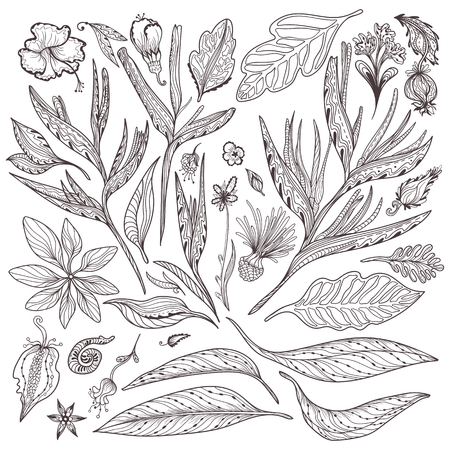 Collection of indian thai leaves and flowers in sketch outline doodle style on white background Illustration