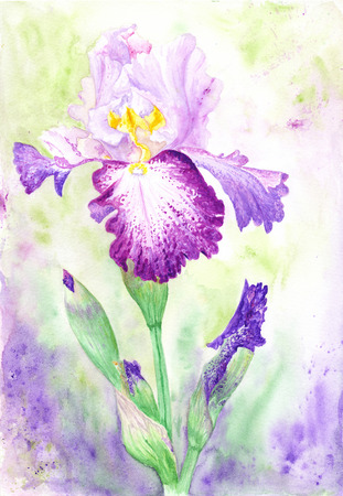 blossoming: High quality detailed hand-painted blossoming flower painting