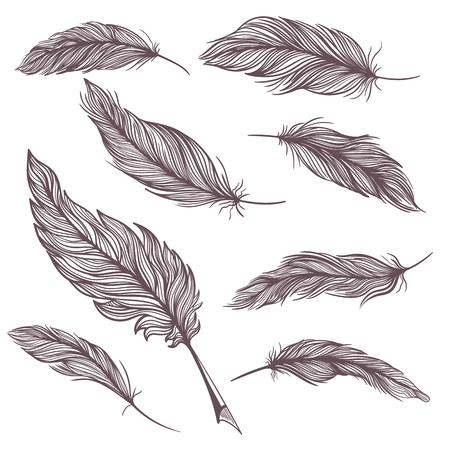 Detailed feather illustrations in sketch style on white background Illustration