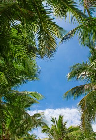Palm tree leaves with clouds and blue sky