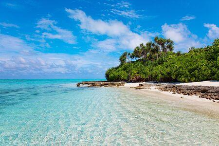 Photo d'animaux de la faune de la nature voyage avec ciel bleu et vue sur le feuillage des palmiers verts