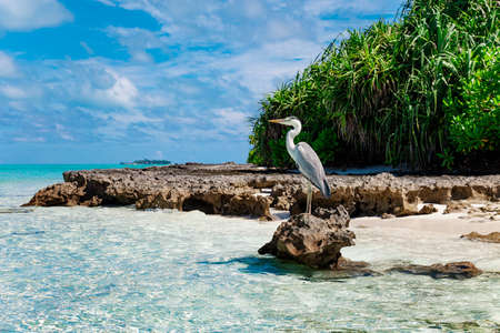 Large Bird on Maldive Island Sand Beach