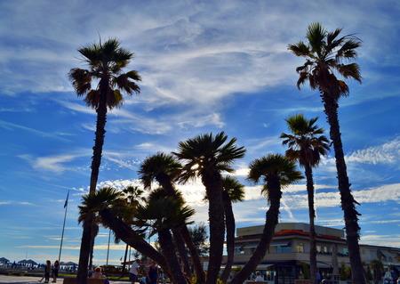 viareggio: Palm trees in Viareggio Beach