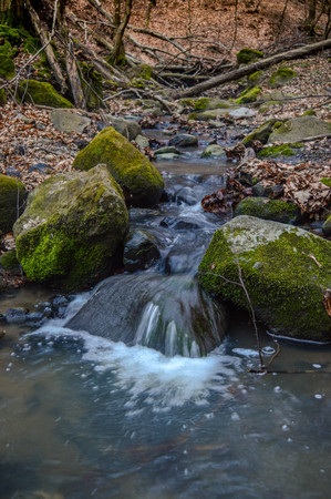 森の中の小川 写真素材