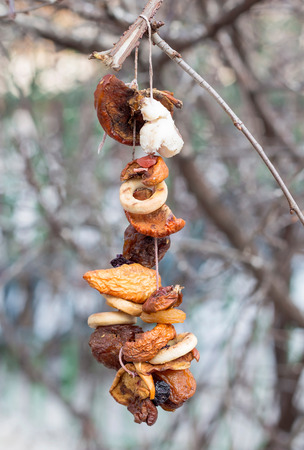 freeze dried: Bird feeder on branch of a tree in forest
