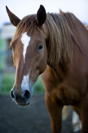 Brown horse portrait photo