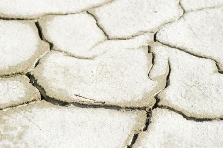salty field