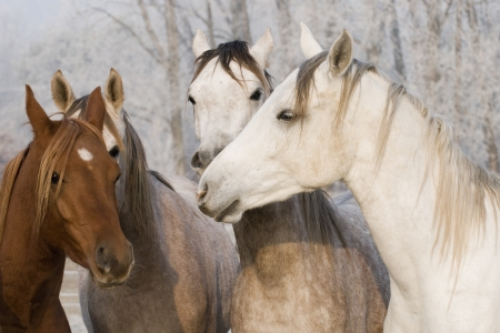 Group of horses photo