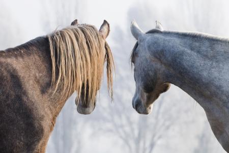 Horses photo
