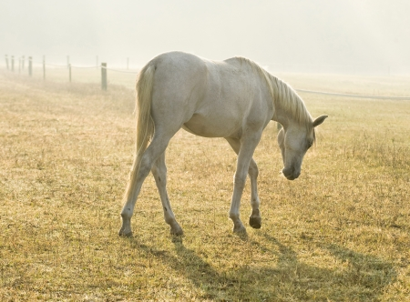 Horse 版權商用圖片