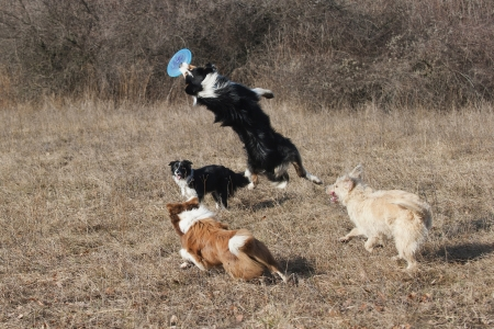 group of dogs playing photo