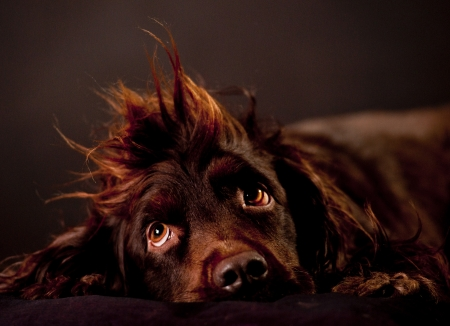 funny dog hair photo