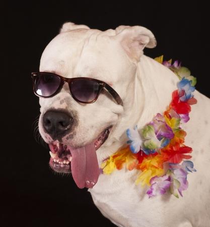 Hawaii dog style photo