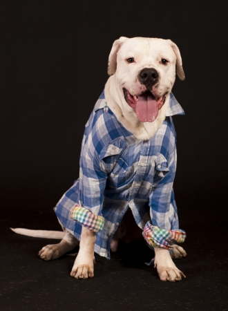 dog with shirt on photo