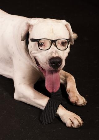 officer dog photo