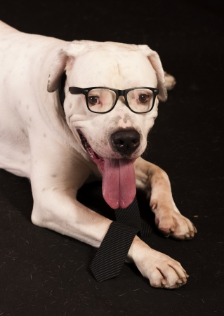officer dog 版權商用圖片