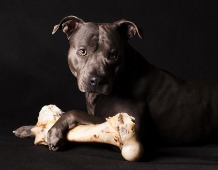 a dog and a bone