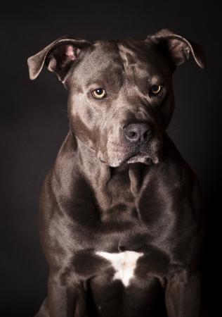 potrait of a dog