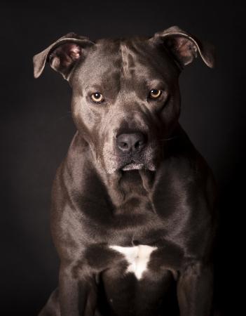portrait of a dog 版權商用圖片