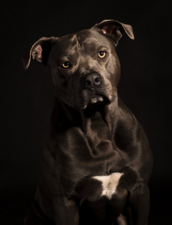 true bred: potrait of a dog