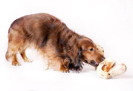 german dog 版權商用圖片
