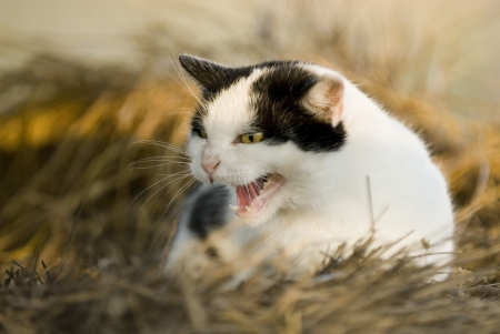 angry cat Stock Photo - 21489270