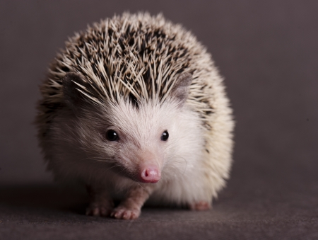 bristles: hedgehog Stock Photo