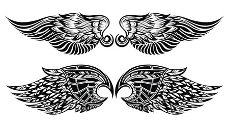 tattoo wings: Wings Illustration