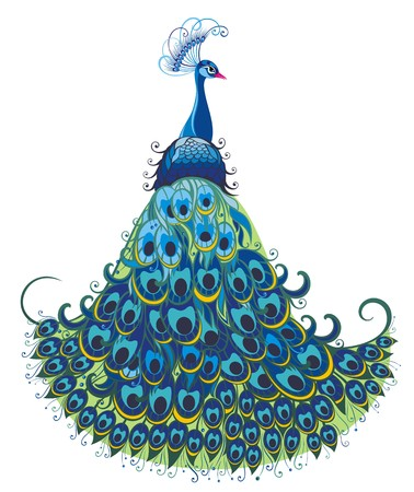 peacock design: Peacock  Vector background Illustration