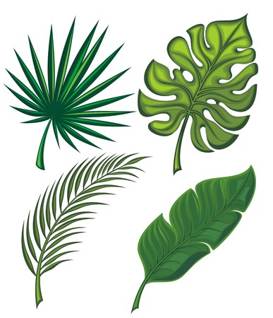 palm branch: Set of tropical leaves