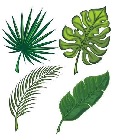 banana leaf: Set of tropical leaves