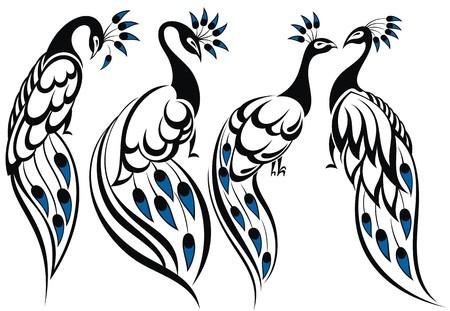 tail: Peacocks Illustration